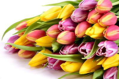 Bouquet with Fresh Tulips