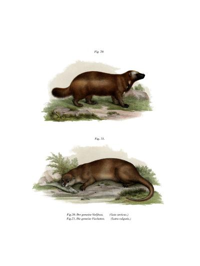 Wolverine, 1860--Giclee Print