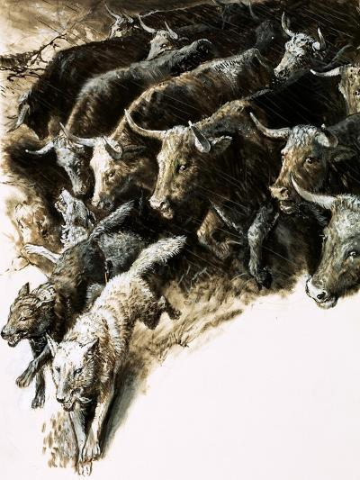 Wolves Caught Up in a Stampede--Giclee Print