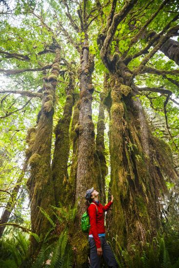 Woman Admires Massive, Ancient Maple Tree Along Bogachiel Rain Forest Trail #825 In The Olympic NP-Ben Herndon-Photographic Print
