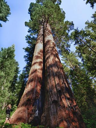https://imgc.artprintimages.com/img/print/woman-by-sequoia-yosemite-national-park-california-usa_u-l-pha5p60.jpg?p=0