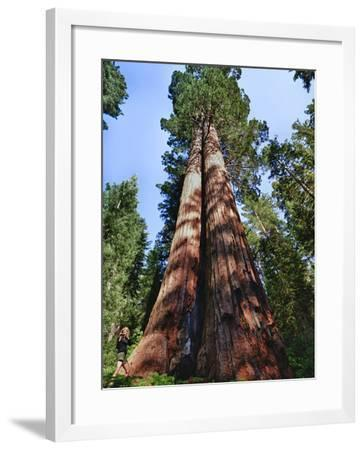 Woman by Sequoia, Yosemite National Park, California, USA-Mark Williford-Framed Photographic Print