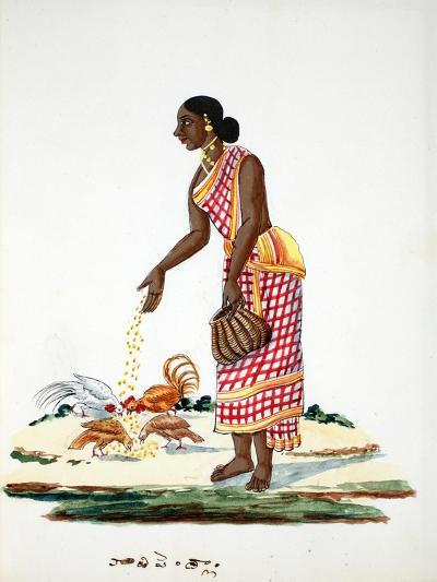 Woman Feeding Chickens--Giclee Print