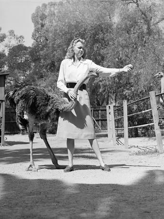 Woman Feeds Ostrich Orange on Farm-Philip Gendreau-Photographic Print