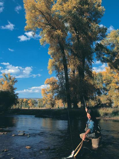 Woman Fly Fishing in Co, Holding Fish-Paul Gallaher-Photographic Print