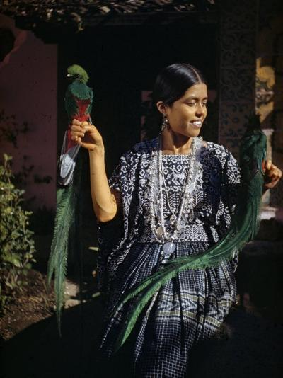 Woman Holds Mounted Quetzals, National Bird of Guatemala-Luis Marden-Photographic Print