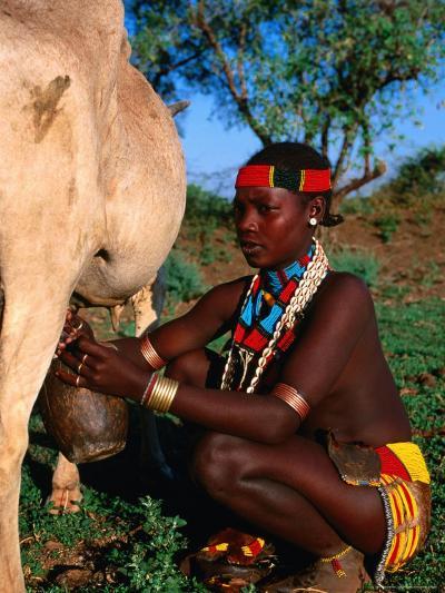Woman Milking Cow, Hamer Village, Turmi, Southern Nations, Nationalities and Peoples, Ethiopia-Ariadne Van Zandbergen-Photographic Print