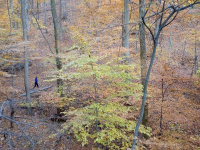 Woman Runs on a Trail Through Eastern Hardwood Forest in the Fall-Skip Brown-Photographic Print