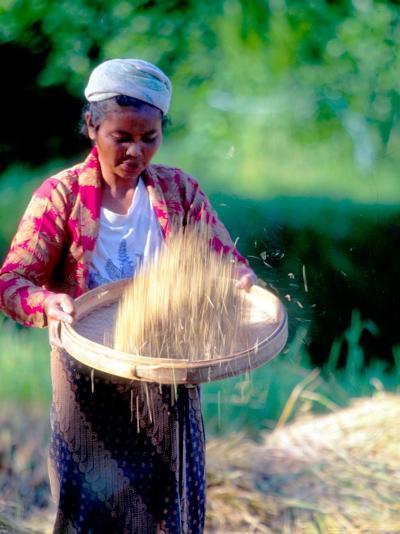 Woman Separates Rice From Hulls, Bali, Indonesia-John & Lisa Merrill-Photographic Print