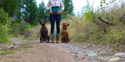 https://imgc.artprintimages.com/img/print/woman-stands-on-a-forested-path-with-her-two-dogs_u-l-q1bbj580.jpg?p=0