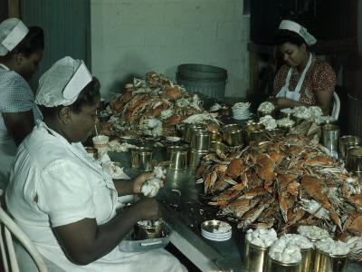 Women Pick and Pack Crab Meat into Cans-Robert Sisson-Photographic Print