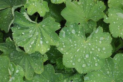 https://imgc.artprintimages.com/img/print/women-s-casing-leaves-drops-of-water_u-l-q11vfvl0.jpg?p=0