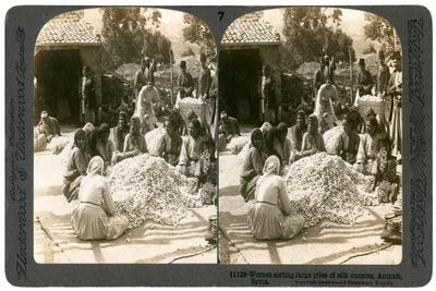 https://imgc.artprintimages.com/img/print/women-sorting-large-piles-of-silk-cocoons-antioch-syria-1900s_u-l-ptszef0.jpg?p=0