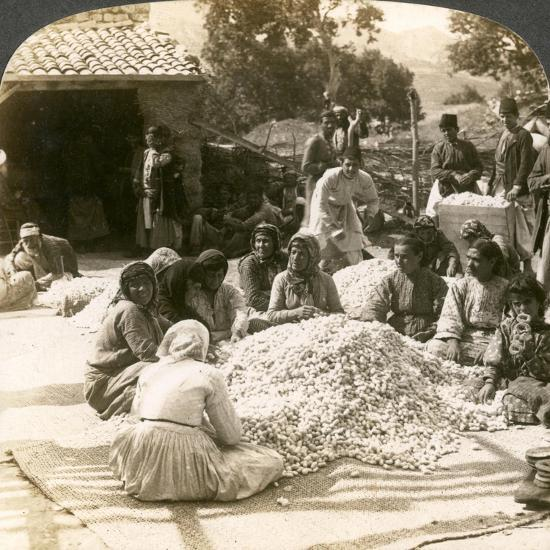 Women Sorting Large Piles of Silk Cocoons, Antioch, Syria, 1900s-Underwood & Underwood-Giclee Print