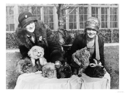 Women with their Persian Cats at Cat Show Photograph - Washington, DC-Lantern Press-Art Print