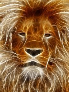 Abstract Lion Cat Animal by Wonderful Dream