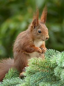 Animal Squirrel Nature by Wonderful Dream