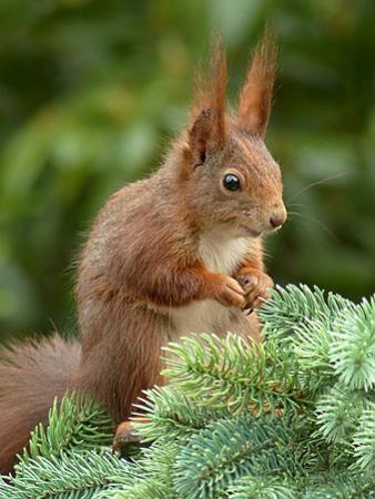 Animal Squirrel Nature