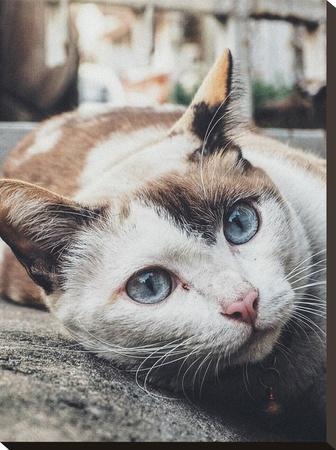 Antique Colors Of Cat