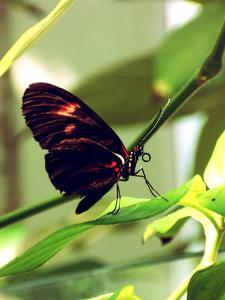 Black Butterfly Insect by Wonderful Dream