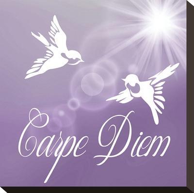 Carpe Diem Birds