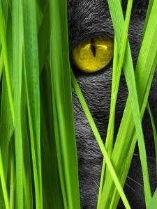 Cat With Grass Landscape by Wonderful Dream