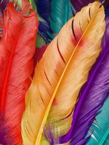 Colorful Bird Feather by Wonderful Dream