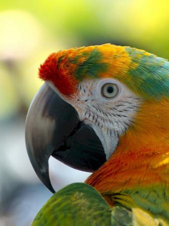 Colorful Bird Parrot Animal