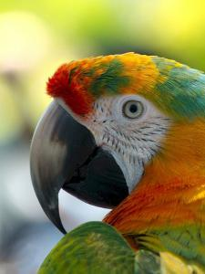 Colorful Bird Parrot Animal by Wonderful Dream