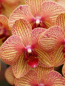 Colorful Exotic Orchid Flower by Wonderful Dream