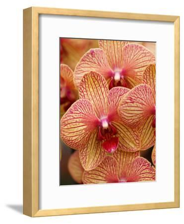 Colorful Exotic Orchid Flower