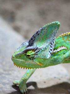 Exotic Reptile Animal 2 by Wonderful Dream