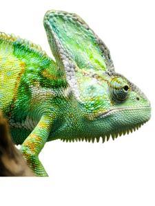 Exotic Reptile Animal by Wonderful Dream