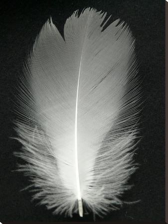 wonderful-dream-feather-bird-silver