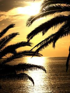 Sunset With Palm Leafs Travel by Wonderful Dream