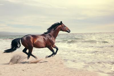 Wonderful Marine Landscape with Beautiful Bay Horse- anakondasp-Photographic Print