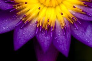 Symmetrical Lotus for Conceptual Photo by wong yu liang