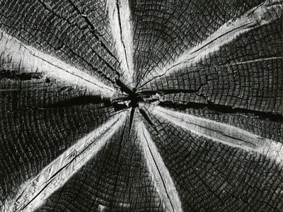 https://imgc.artprintimages.com/img/print/wood-1972_u-l-q1g6wof0.jpg?p=0