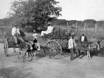 Wood Carts, Jamaica, C1905-Adolphe & Son Duperly-Giclee Print