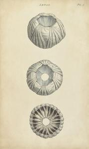 Cylindrical Shells I by Wood