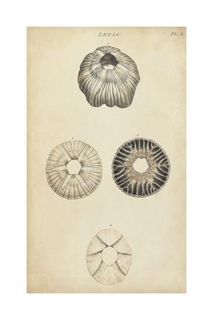Cylindrical Shells II