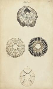 Cylindrical Shells II by Wood