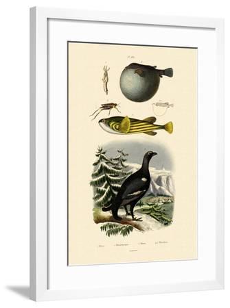 Wood Grouse, 1833-39--Framed Giclee Print
