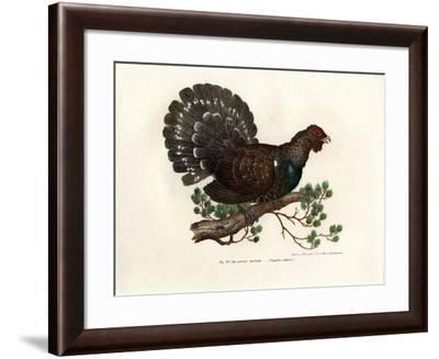 Wood Grouse, 1864--Framed Giclee Print