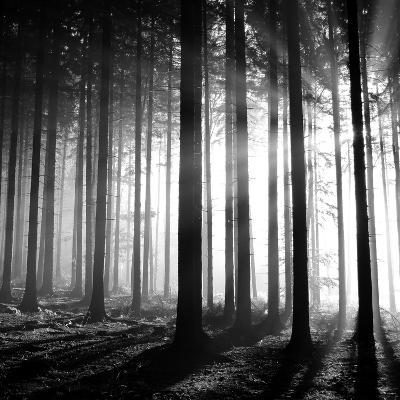 Wood Light--Photographic Print