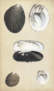Marine Bivalves II by Wood