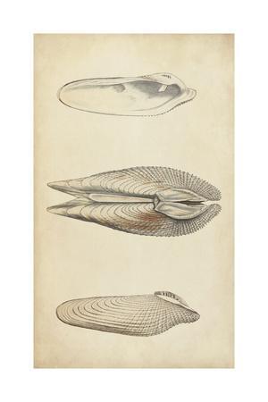 Marine Mollusk I