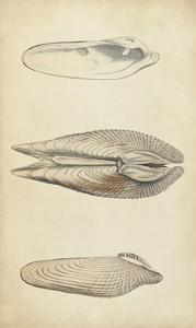Marine Mollusk I by Wood