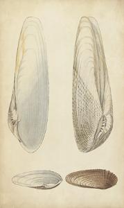 Marine Mollusk II by Wood