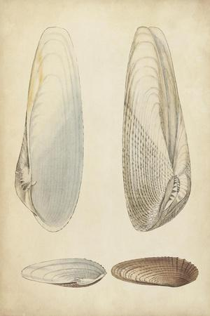 Marine Mollusk II